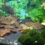 Laub im Aquarium