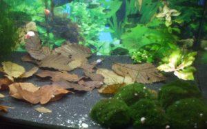 Aquariumlaub