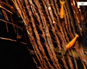 Verstecke aus Arecafaser
